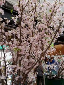 16-01-17-14-05-01-959_photo