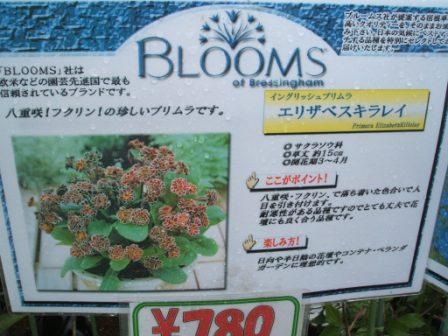 20070407-ブルーム エリザベスキライ.JPG