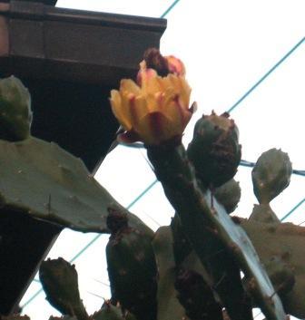 20071107-サボデンの花.JPG