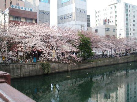 20080327-サクラ大岡川.JPG