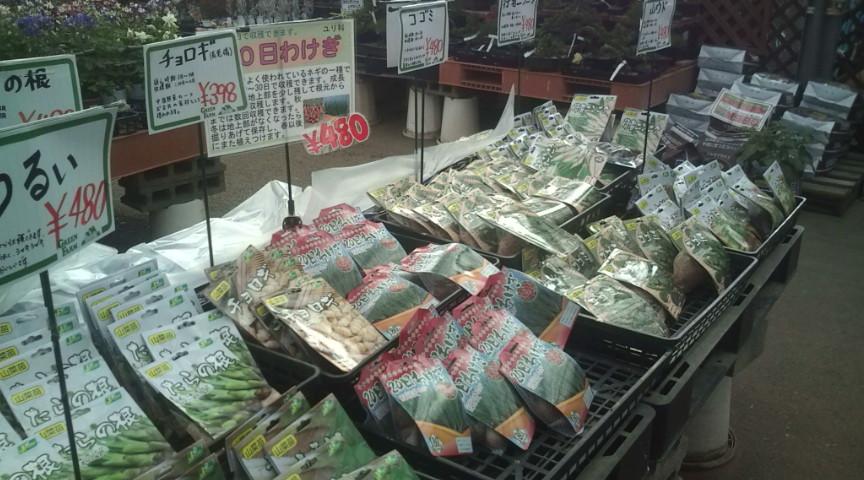 20100308-野菜球根.jpg