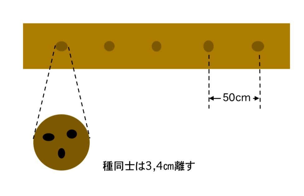 枝豆の種まき方法