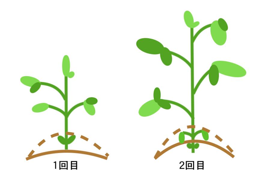 枝豆の土寄せ