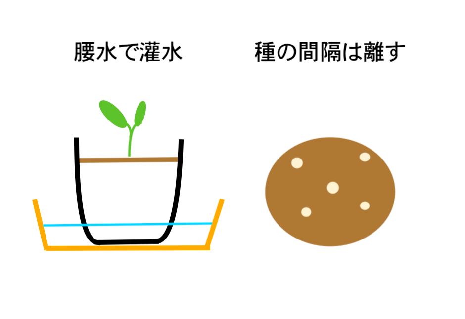 トマトの種撒き
