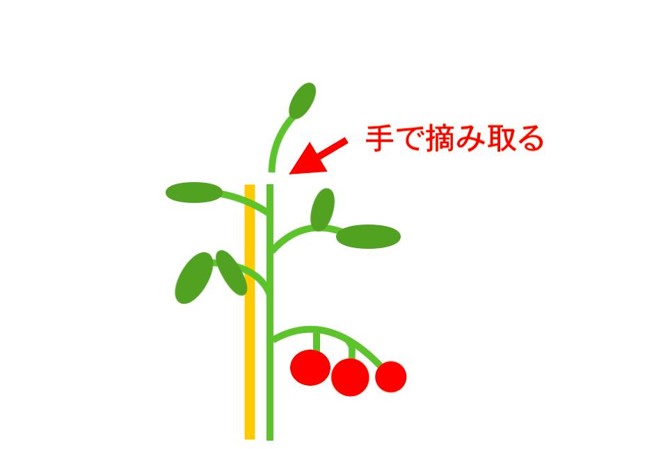 トマトの摘芯