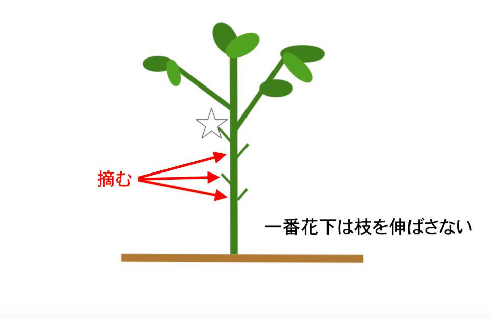 トウガラシ わき芽